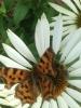Biene und Schmetterling