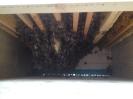 Blick in den Bienenstock (von unten)