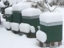 Winter am Bienenstand